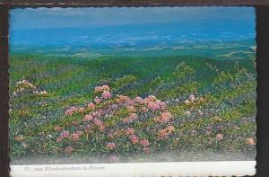 Rhododendron in Bloom VA Postcard BIN