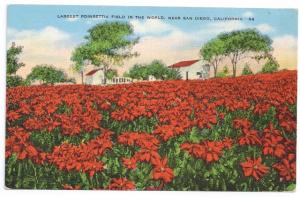 San Diego CA Largest Poinsettia Field in the World Kropp Linen Flower Postcard