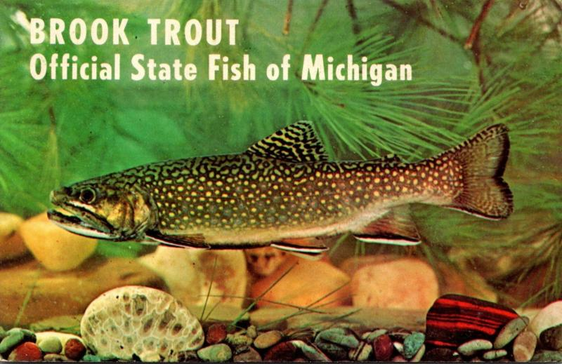 Michigan Official State Fish The Trout