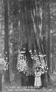 Santa Cruz CA Big Trees  Largest Post Card Case in The World