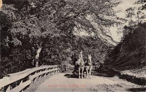 Hudson Wisconsin~Horse Team Wagon on Coulee Road~1908 B&W Postcard