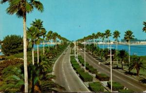 Florida Clearwater Memorial Causeway Looking Westward 1968