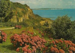 (g12) Wight Luccombe Chine Dixon Postcard