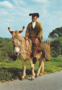SARDEGNA, Italy, 1950-70s; Tornando A Casa Con Risparmio Di Carburante, Donkey
