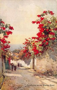 Portugal Madeira Flowers Poinsettia on the Mount Road postcard