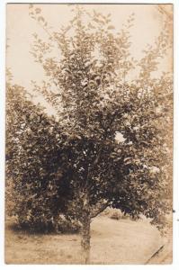 RPPC, Apple Tree, PM Laconia, Lakeport Station