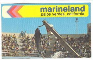 Pilot Whale, Marineland, Palos Verdes, California,  40-60s