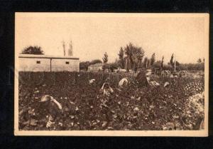 050607 Turkestan Kokand Gathering of cotton Vintage