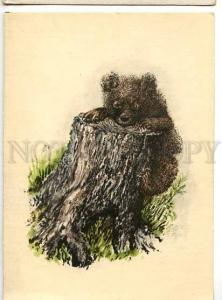 128588 Curious BEAR by CHARUSHIN old Russian PC
