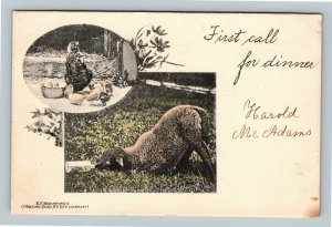 First Call For Dinner, Chickens, Lamb, Vintage Postcard