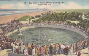 Florida Marineland Top Deck At Marine Studios Feeding Time 1952