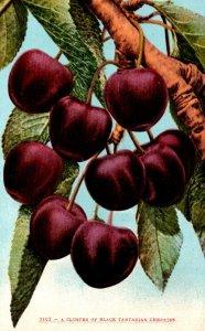 Cluster Of Black Tartarian Cherries