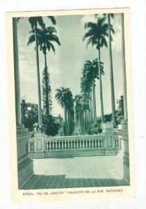 BRESIL, Rio de Janeiro, Brazil, 20-30s, Palmiers de la Rue Paysandu