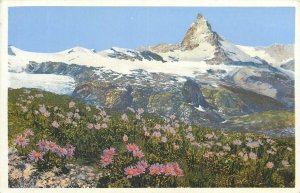 Photochrom early postcard landscape rural life tree forest mountain flowers