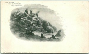 1900s SAN FRANCISCO CA PMC Postcard Seal Rocks, Cliff House Mitchell Unused