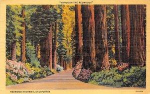 Through the Redwoods Redwood Highway CA