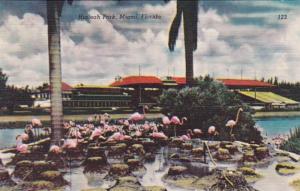 Florida Miami Flamingos At Hialeah Park
