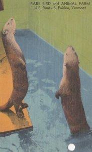 Rare Bird & Animal Farm , FAIRLEE , Vermont , 30-40s ; Otters