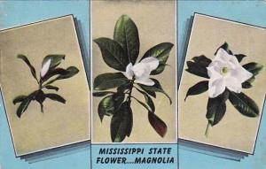 Mississippi State Flower The Magnolia