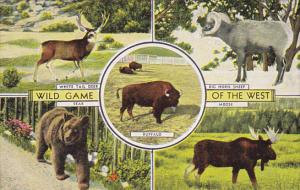 Wild Game Of The West Bear Deer Sheep Moose and Baffalo