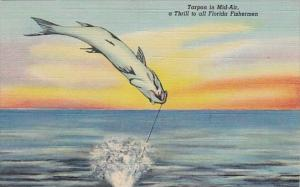 Florida Tarpon In Mid Air A Fishing Thrill To All Florida Fishermen Curteich