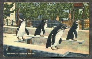 4515 - BERMUDA 1937 Penguins at Aquarium Postcard to Canada