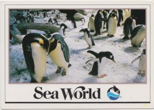 Penguins at Sea World, unused Postcard