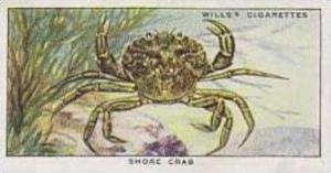 Wills Vintage Cigarette Card The Sea-Shore No 27 Shore Crab  1938