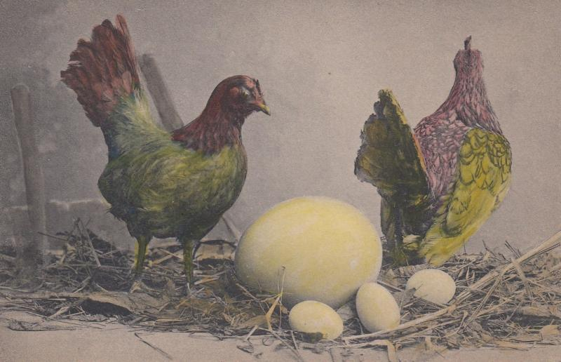 2 Chickens & Nest, Color , 1901-07