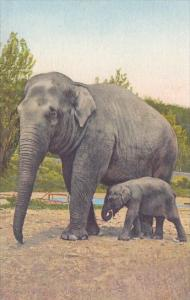 Mother Elephant With baby Elephant