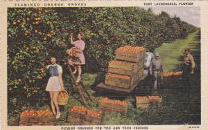 Flamingo Orange Groves , FORT LAUDERDALE , Florida, 30-40s