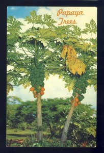 Hawaii/HI Postcard, Papaya Trees, Tropical Fruit Grows Prolifically On Islands