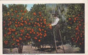 Garnett Orange Grove, ST. AUGUSTINE, Florida, PU-1926