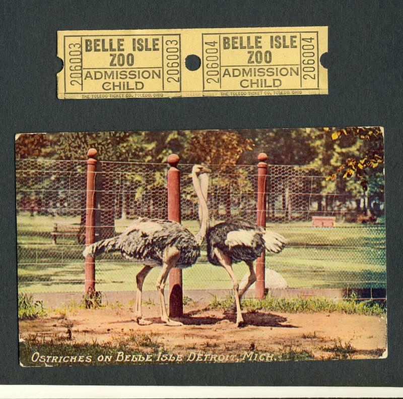Detroit, Michigan/MI Postcard & Tickets, Ostriches At Zoo On Belle Isle, 1913!
