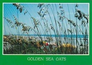 Greetings From Myrtle Beach Golden Sea Oats Myrtle Beach South Carolina