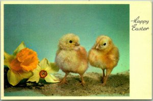 Vintage Swiss EASTER Greetings Postcard Baby Chicks Switzerland Unused