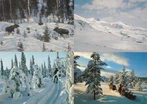 Lappland Reindeer Norway At Christmas 4x Postcard s