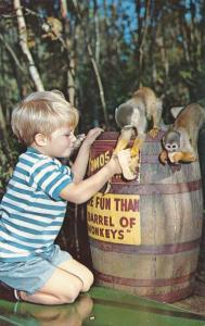 More Fun than Barrel of Monkeys - Homosassa Springs near Tampa Bay FL, Florida
