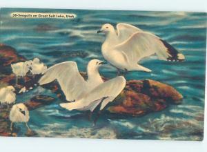 Unused Linen SEAGULL BIRDS ON GREAT SALT LAKE Salt Lake City Utah UT F3615