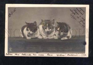 014638 Dreaming KITTENS Vintage PHOTO tinted PC