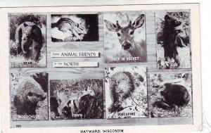 P1275 1949 used postcard hayward wisconsin multiview animal friends