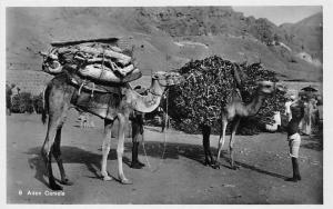 Yemen Aden camels and native people, real photograph