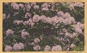 Flowers Mountain Rhododenron In Bloom 1956