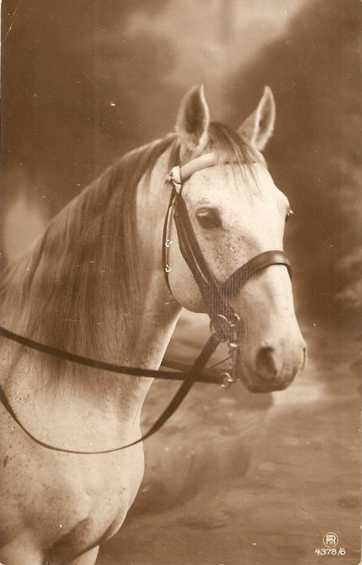 Beautiful horse Old vintage French postcard