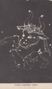 Hayden Planetarium Taurus Horoscope Bull Old Astronomy Constellation Postcard