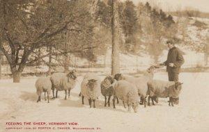 RP: PUTNEY , Vermont , 1911 ; Feeding the Sheep