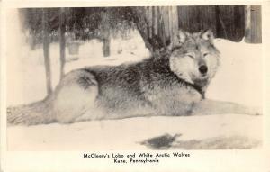 F28/ Kane Pennsylvania RPPC Postcard c1950s McCleery's Lobo Wolves Farm