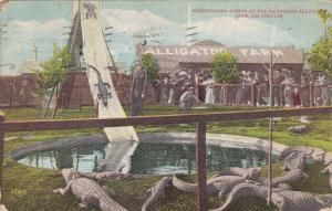 Entertaining Guests at the California Alligator Farm, LOS ANGELES, PU-1911