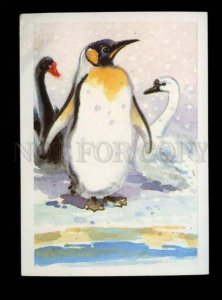 136018 Penguin & Swans ZOO Old Russian Colorful PC