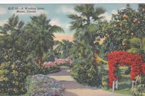 Florida Miami Beautiful Winding Lane 1947 Curteich
